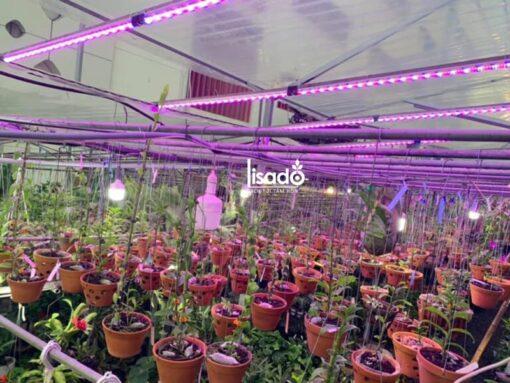 Đèn led trồng rau, hoa lan sáng xanh/đỏ LED TRR 01L 120/25W BR (30B/70R) – Rạng Đông