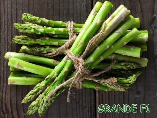 Hạt giống măng tây xanh Grande F1 nhập khẩu Mỹ giá tốt