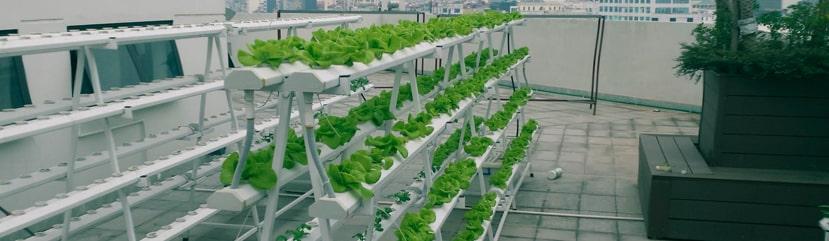 Giàn trồng rau thủy canh tại nhà
