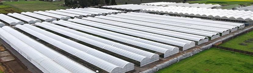 Mẫu nhà màng - nhà kính nông nghiệp thịnh hành nhất