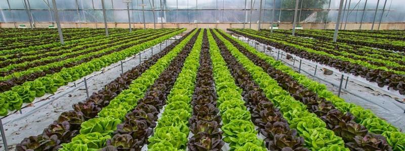 Hệ thống giàn trồng rau thủy canh