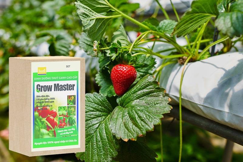 Dinh dưỡng thủy canh Grow Master cho rau củ, quả dạng bột