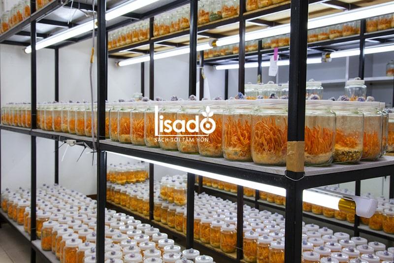 Đèn LED nuôi đông trùng hạ thảo LED NCM 120/16W Dimming - Rạng Đông