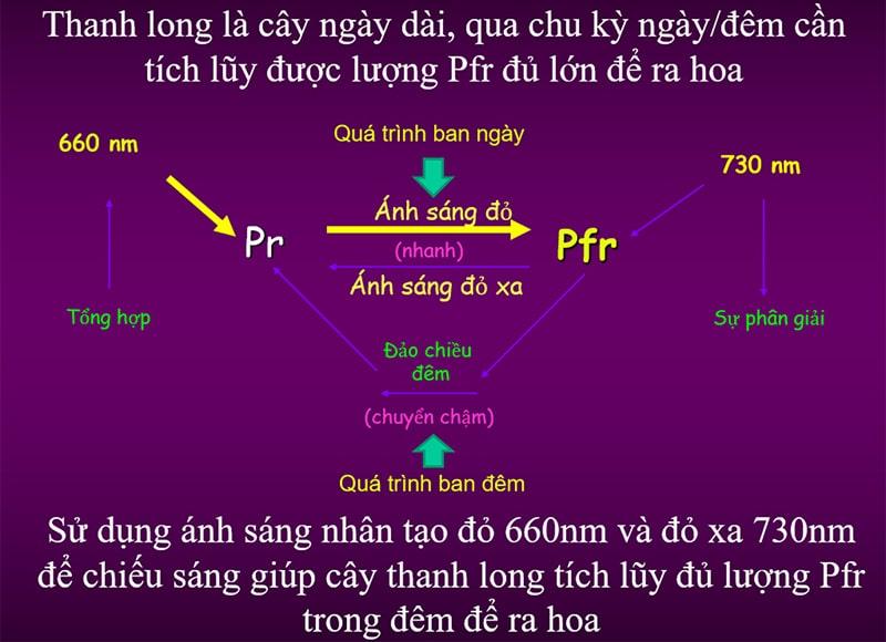 Đèn LED trồng thanh long 9W LED.TL-T60 WFR/9W - Rạng Đông