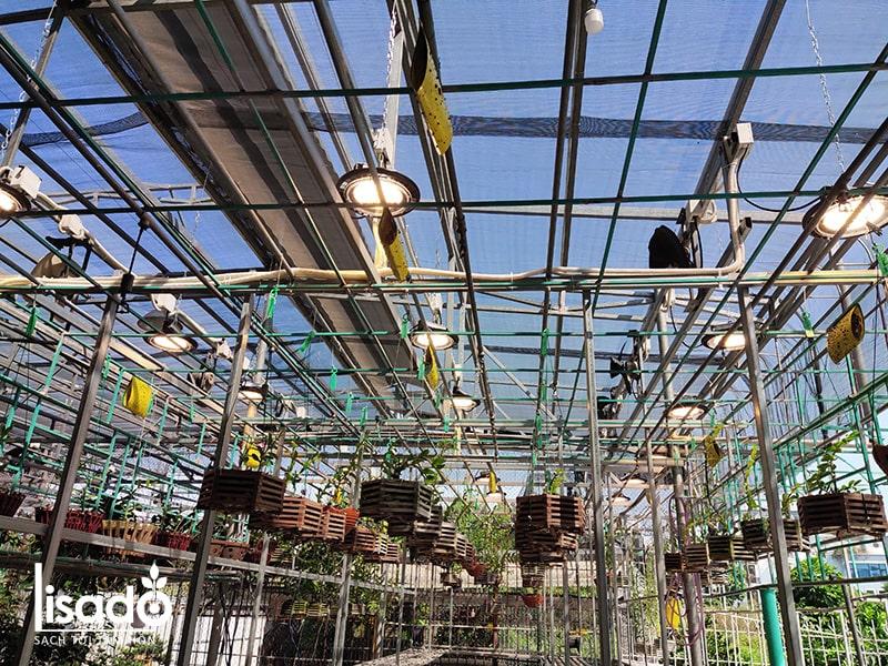 Đèn trồng hoa lan LED UFO330 150W/WBU - Rạng Đông