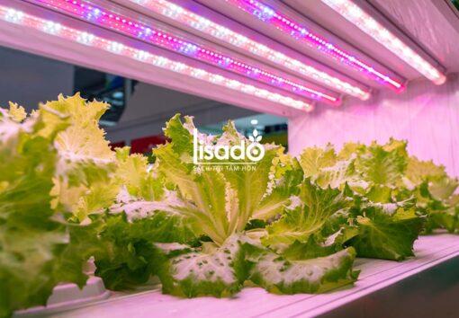 Đèn LED chuyên dụng trồng rau TRR 120/25W-100% RED - Rạng Đông