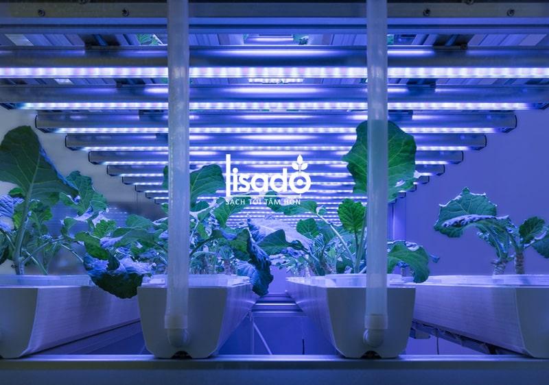 Đèn LED trồng rau, nuôi cấy mô TRR 120/25W-100% BLUE - Rạng Đông