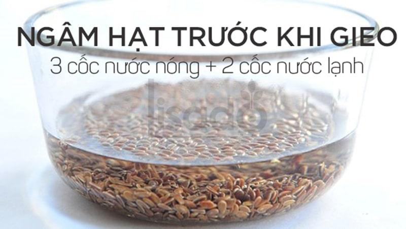 Hướng dẫn ngâm ủ hạt trước khi gieo