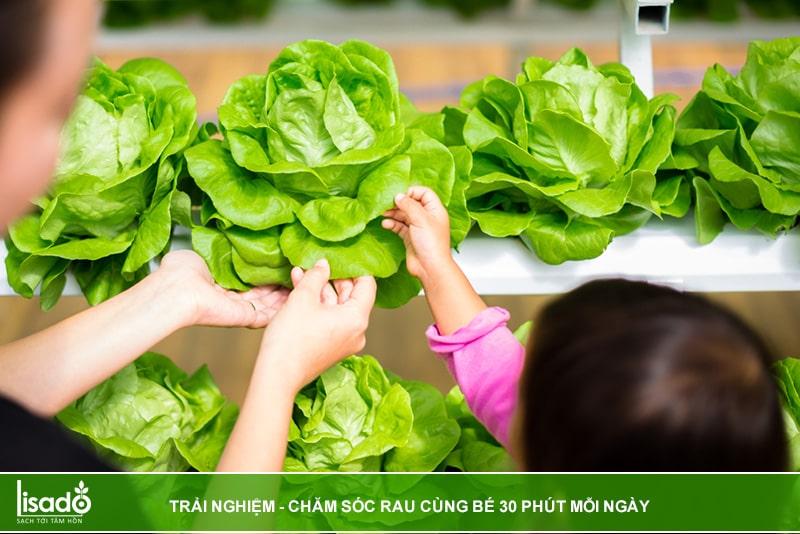 Trải nghiệm, chăm sóc rau thủy canh cùng bé mỗi ngày